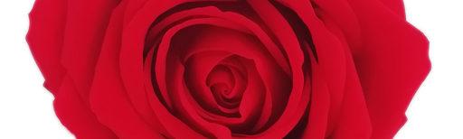 Rosestabilizzate.it
